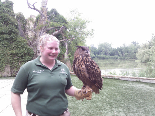 Notice the eyes are reddish-brown on the eagle owl, not yellow like most other owls.