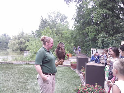 A closer picture of the eagle owl