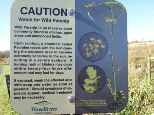 wild parsnip warning sign